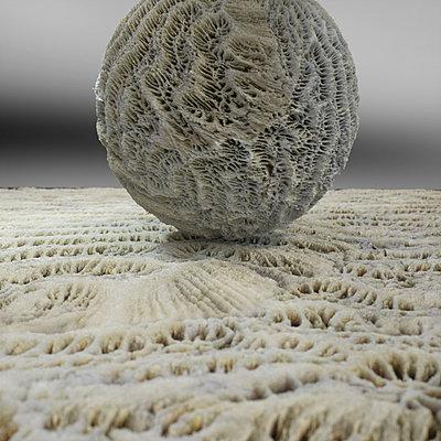 Cliquez sur l'image pour la voir en taille réelle  Nom : Mineral Reign 14 - Fossil Coral.jpg Affichages :13 Taille :387,5 Ko ID : 21075