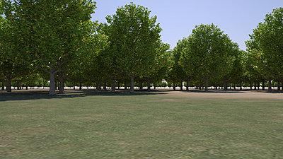 Cliquez sur l'image pour la voir en taille réelle  Nom : Forest_rs_Daylight_AllTrees_r1_20s.jpg Affichages :17 Taille :256,8 Ko ID : 18401