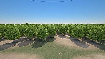 Cliquez sur l'image pour la voir en taille réelle  Nom : Forest_rs_DomeLight_VueHaute_r1_40s.jpg Affichages :25 Taille :310,3 Ko ID : 18404