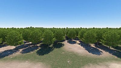 Cliquez sur l'image pour la voir en taille réelle  Nom : Forest_O_Daylight_AllTrees_VueHaute_r1 55s.jpg Affichages :30 Taille :310,3 Ko ID : 18406