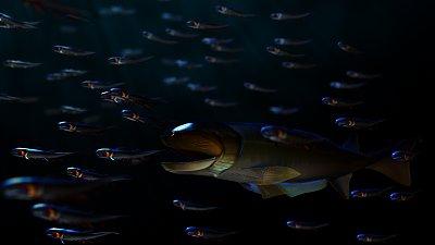 Cliquez sur l'image pour la voir en taille réelle  Nom : cheirolepis-acanthodiens.jpg Affichages :19 Taille :408,5 Ko ID : 23244