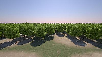 Cliquez sur l'image pour la voir en taille réelle  Nom : Forest_rs_DayLight_VueHaute_r1_32s.jpg Affichages :14 Taille :304,8 Ko ID : 18405