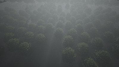 Cliquez sur l'image pour la voir en taille réelle  Nom : Forest_rs_NightFog_VueHauteA_r1_47s.jpg Affichages :8 Taille :99,5 Ko ID : 18409