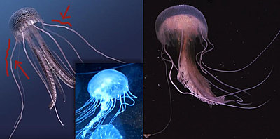 Cliquez sur l'image pour la voir en taille réelle  Nom : meduse.jpg Affichages :2 Taille :50,2 Ko ID : 21202