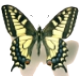 Avatar de Machaon